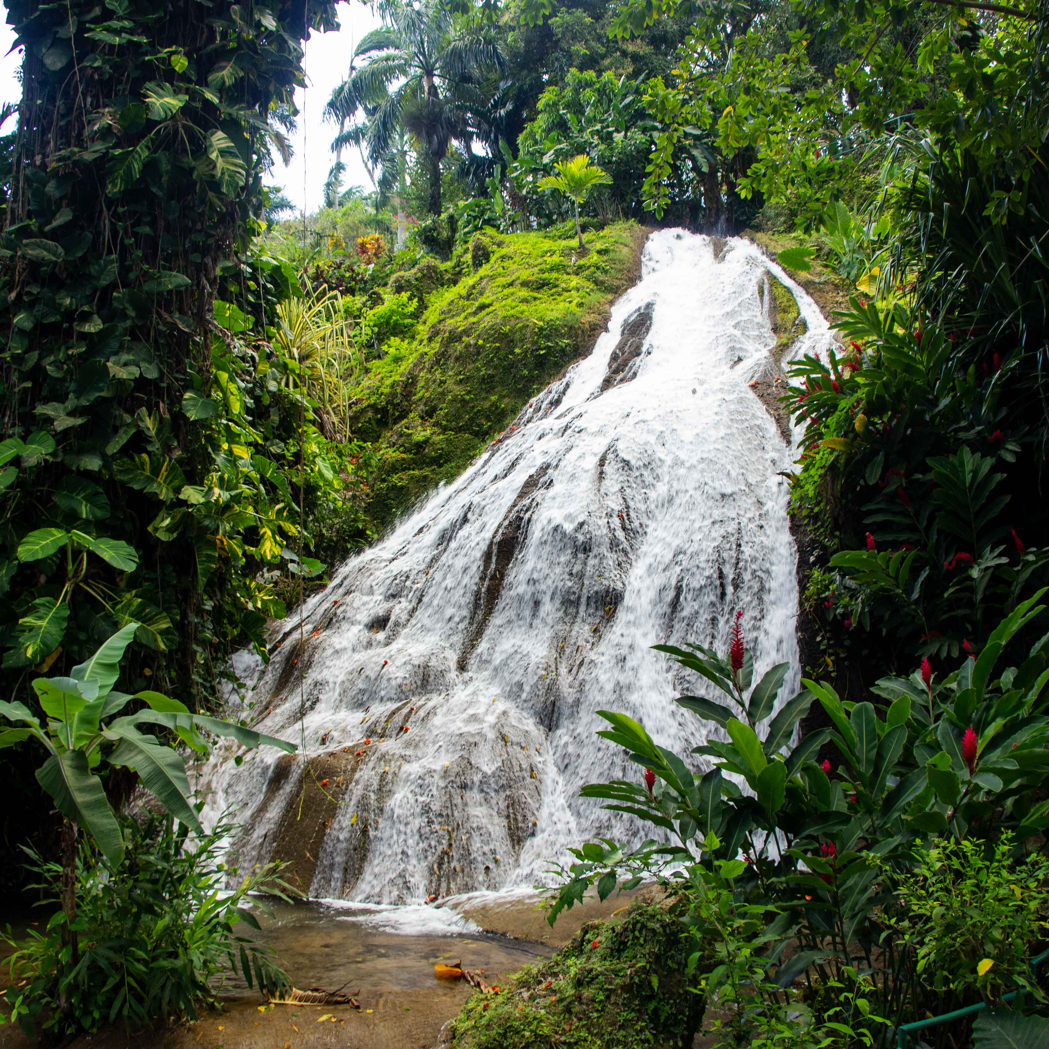 Shaw Park Gardens Jamaica