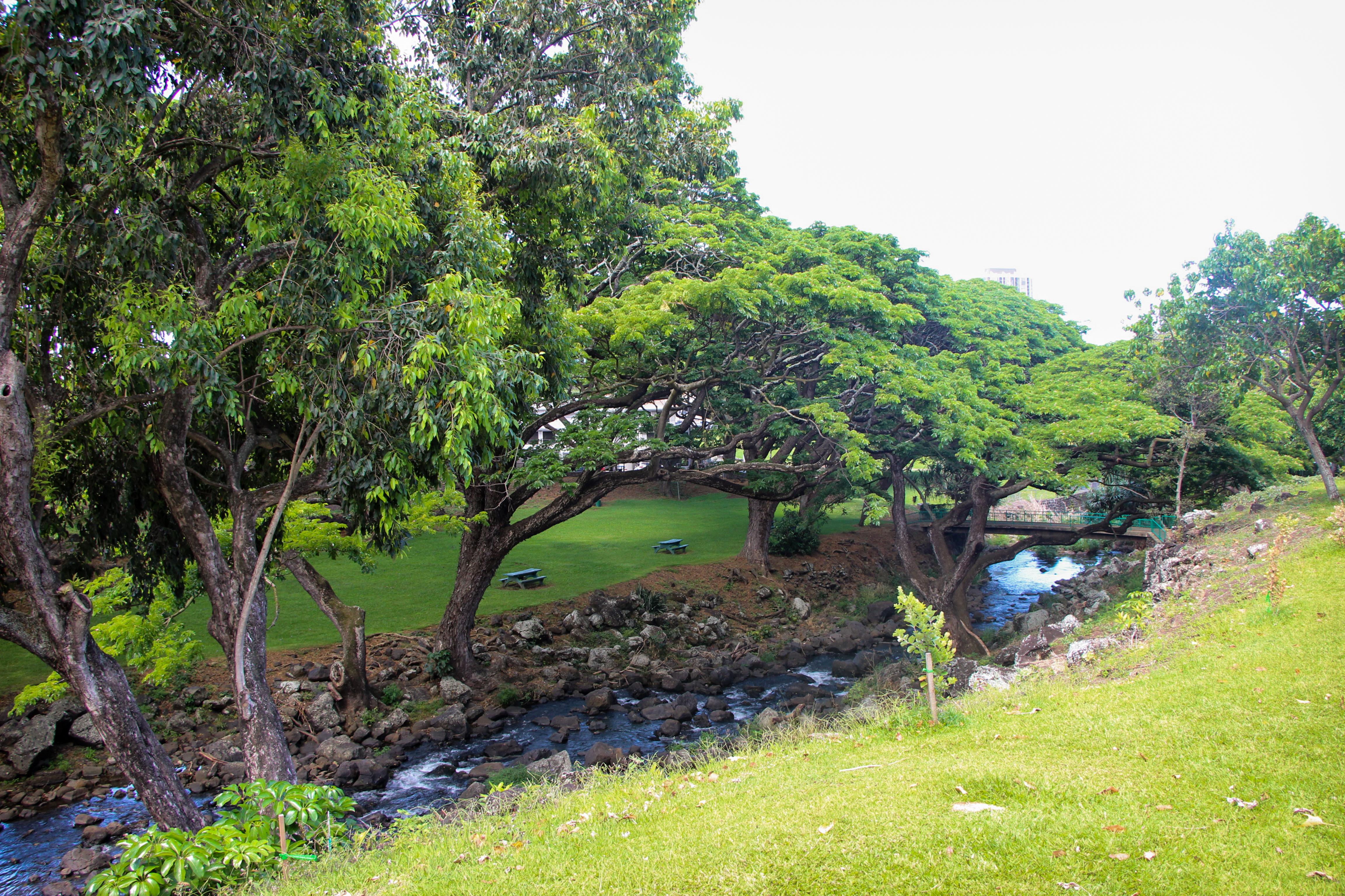 Lili´uokalani Botanical Garden