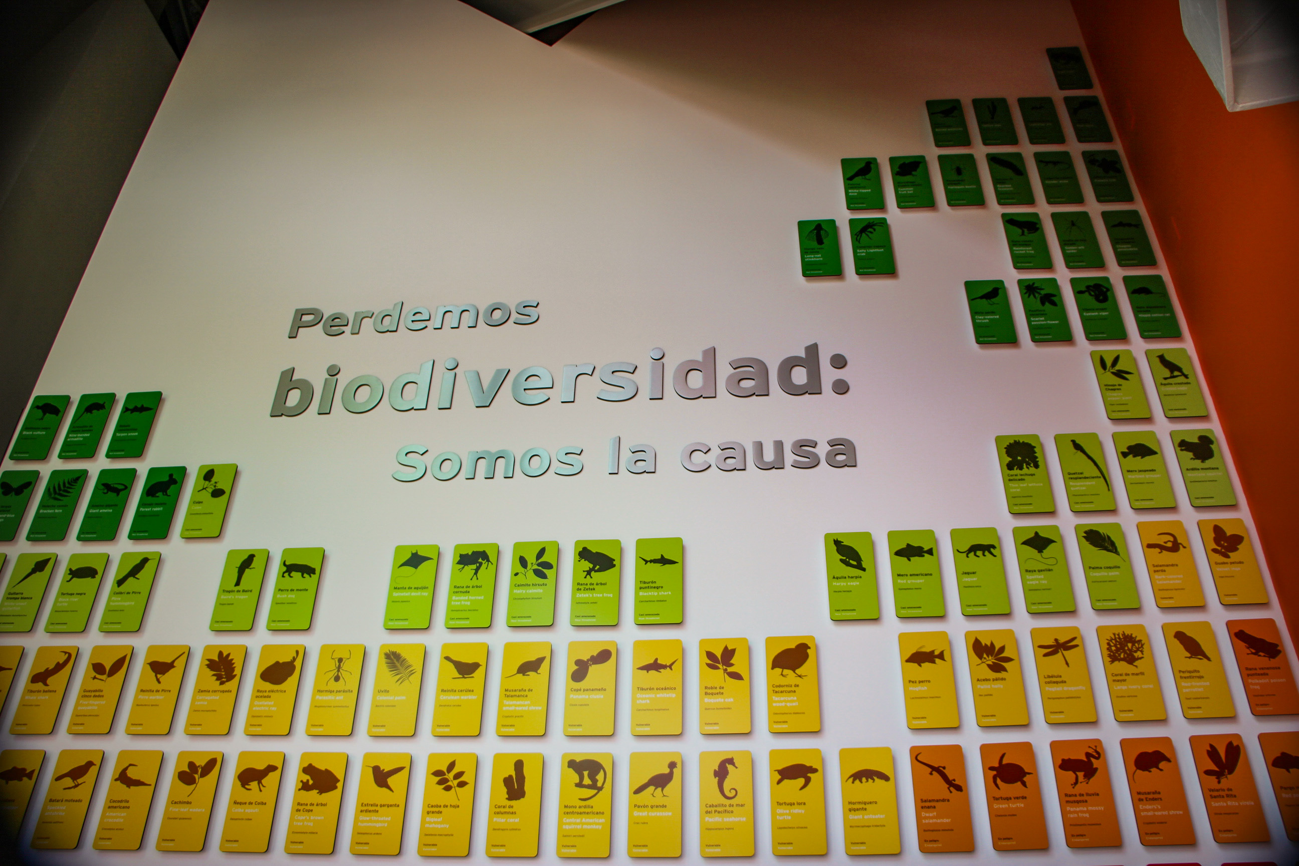 BIOMUSEU: Vitrina de la BiodiversidadeRSIDADE PANAMENHA 2