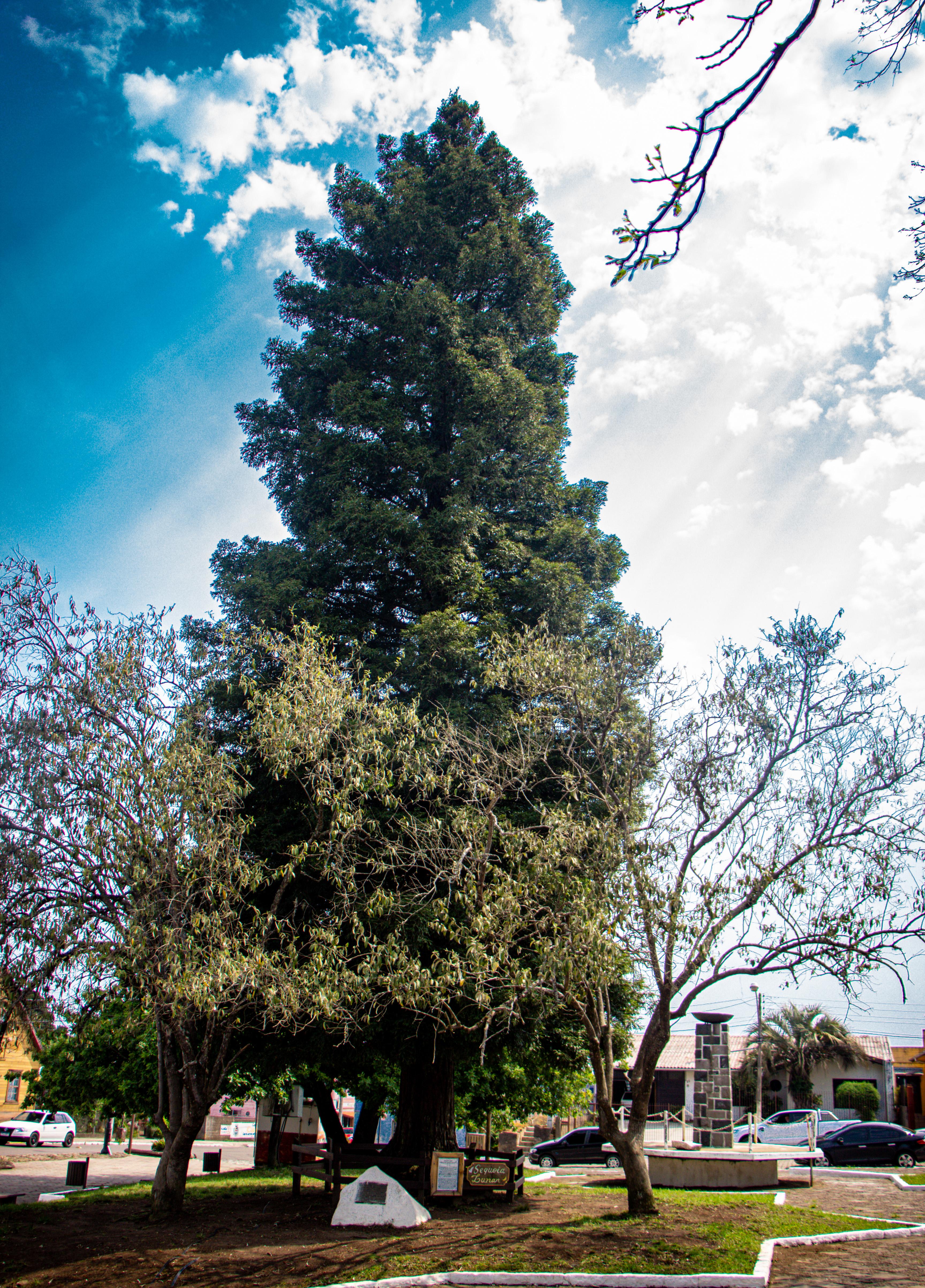 CENTRO de cambará do sul Sequoia Lunar