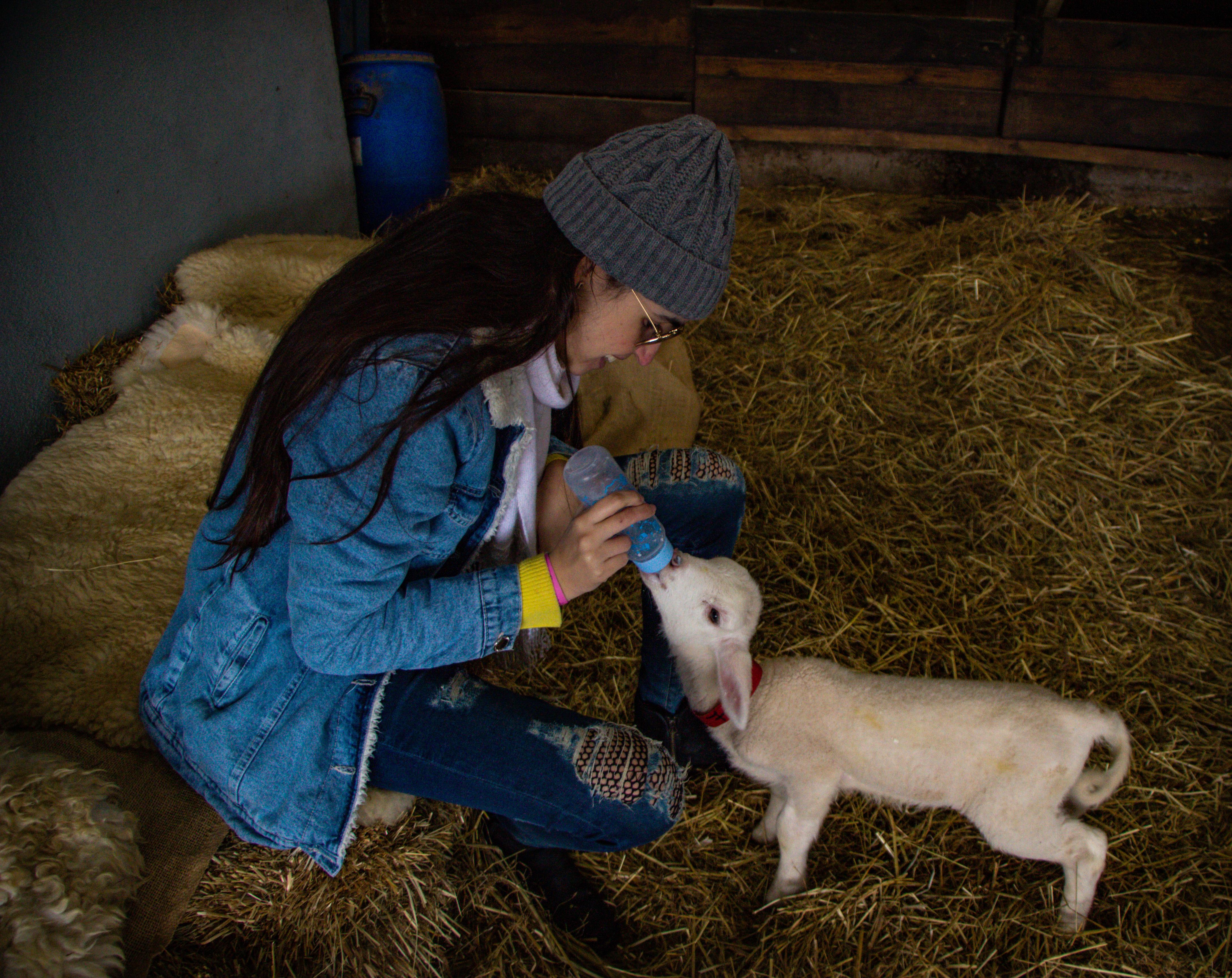 PARQUE DA OVELHA aventura com pastor cordeiro recém nascido