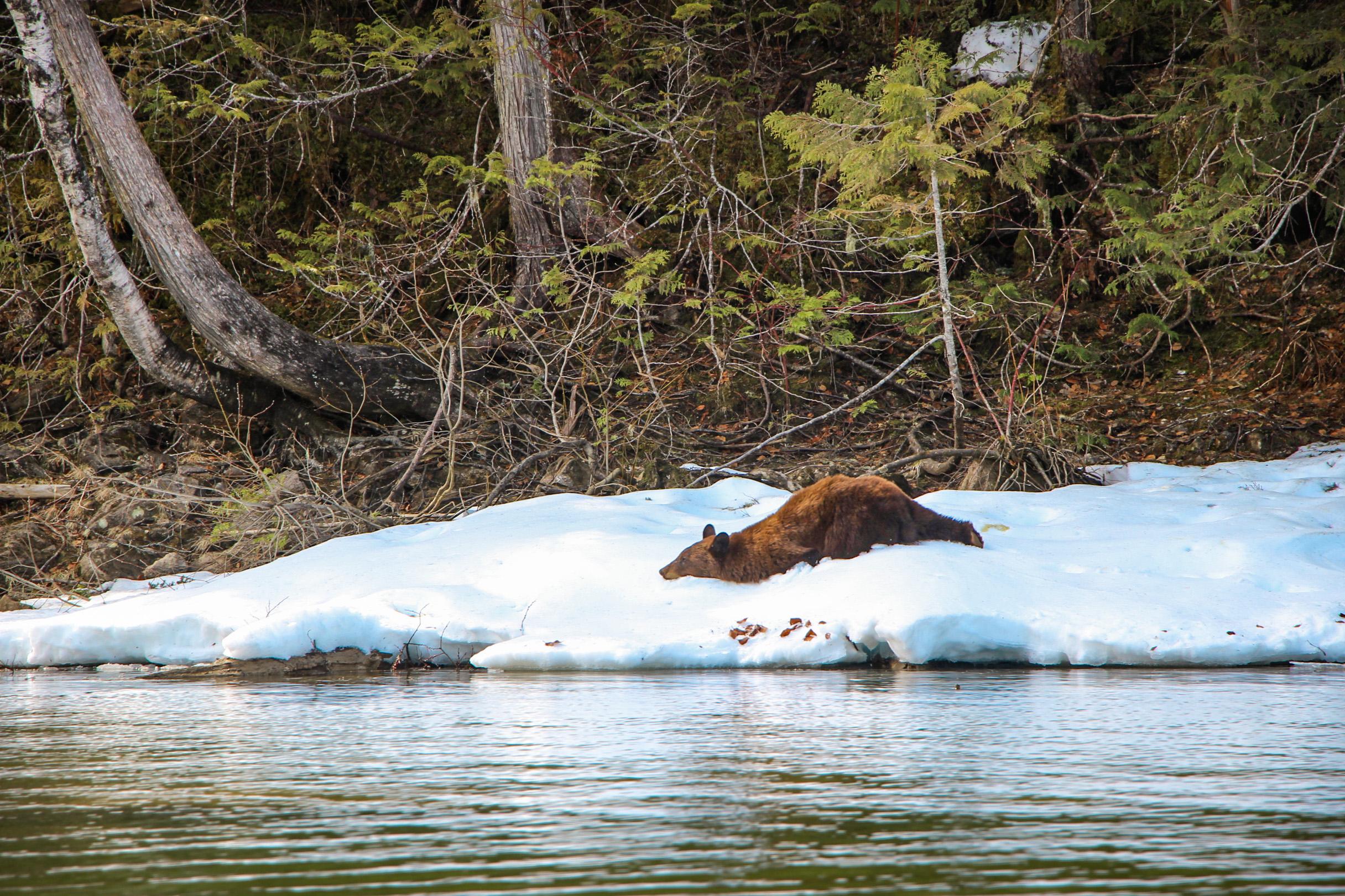Tour River Safari Bear CANADIAN ROCKY MOUNTAINS 3